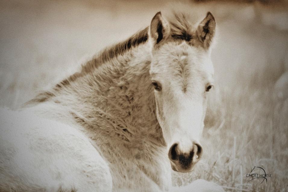 Watrous Valley Ranch Quarter Horse