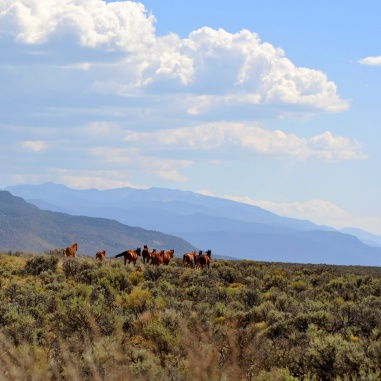 Wild Horses-Black Jack band-Questa, NM