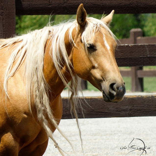 Watrous Valley Ranch Quarter Horse